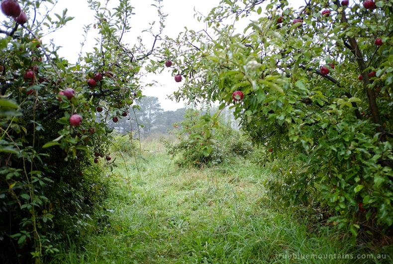 LoganBrae-orchard