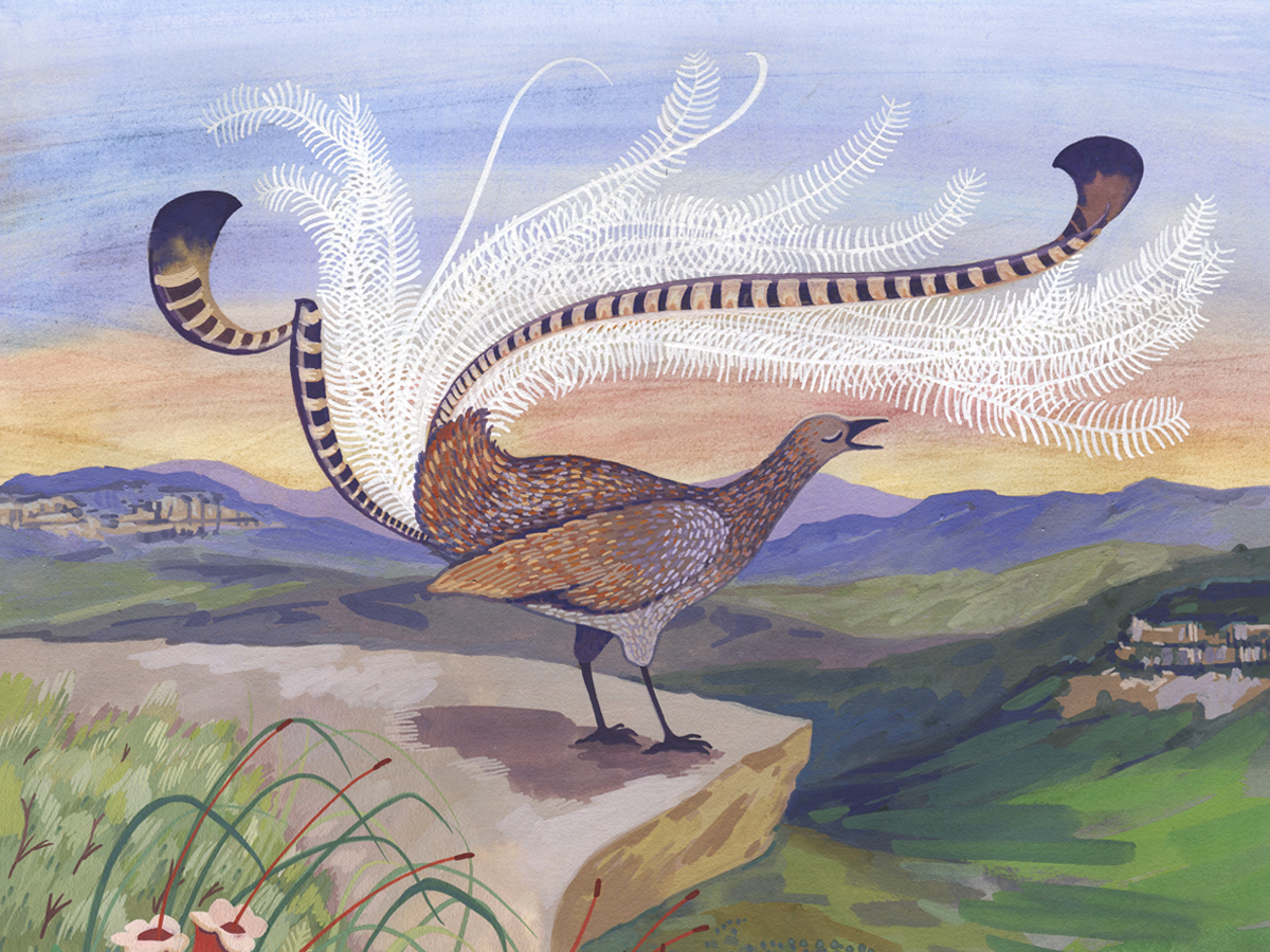leonard the lyrebird a blue mountains children s book true blue